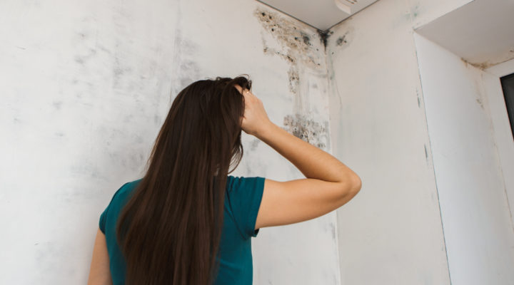 Holy Moldy! Here's Everything You Need to Know About Cleaning Black Mold