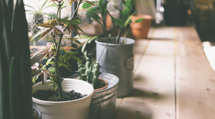 7 Reasons Why You Need Indoor Plants in Your House