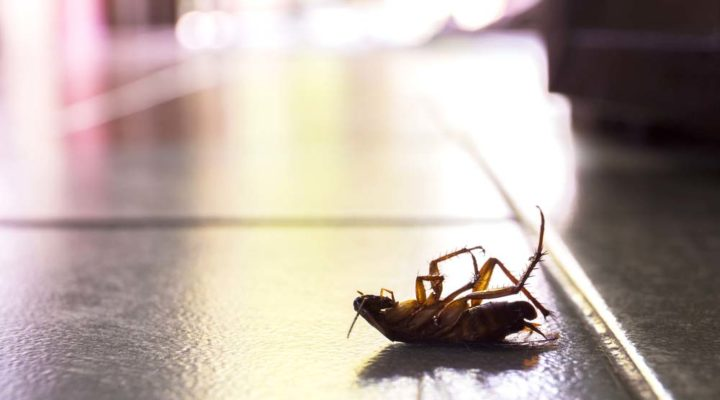 Ways To Keep Your Home Bug-Proof in Hillsboro